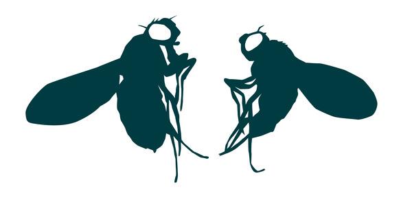 EMBL fly image