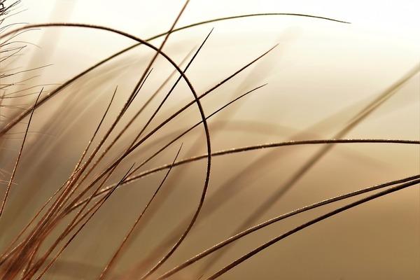 grass-2051291_960_720