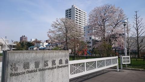 satsukansakura01
