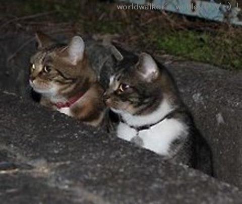 ネコ(2匹)trm(大)