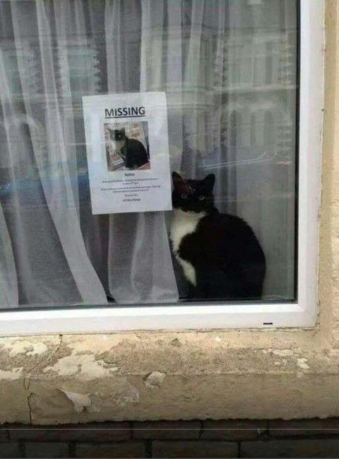 ネコが行方不明
