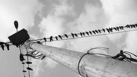 電線にとまるたくさんの小鳥