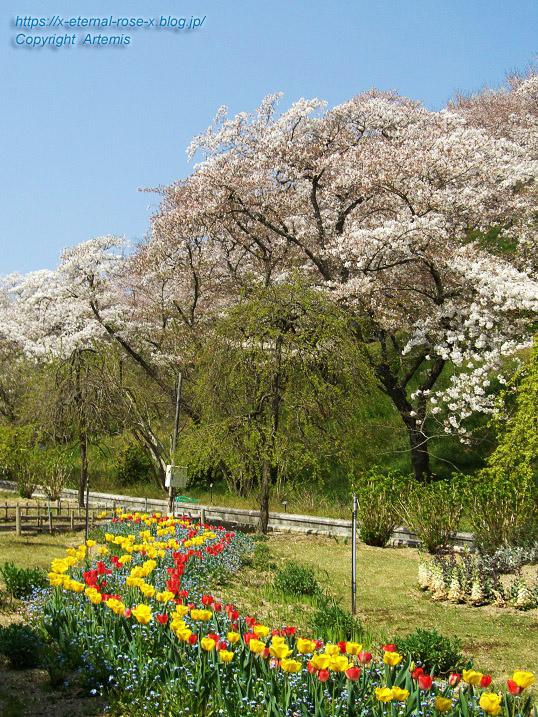 11.4.14.1 半田山植物園  (31)