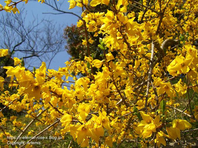 11.4.14.1 半田山植物園  (10)