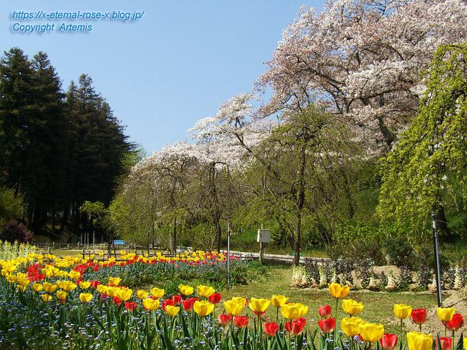 11.4.14.1 半田山植物園  (27)