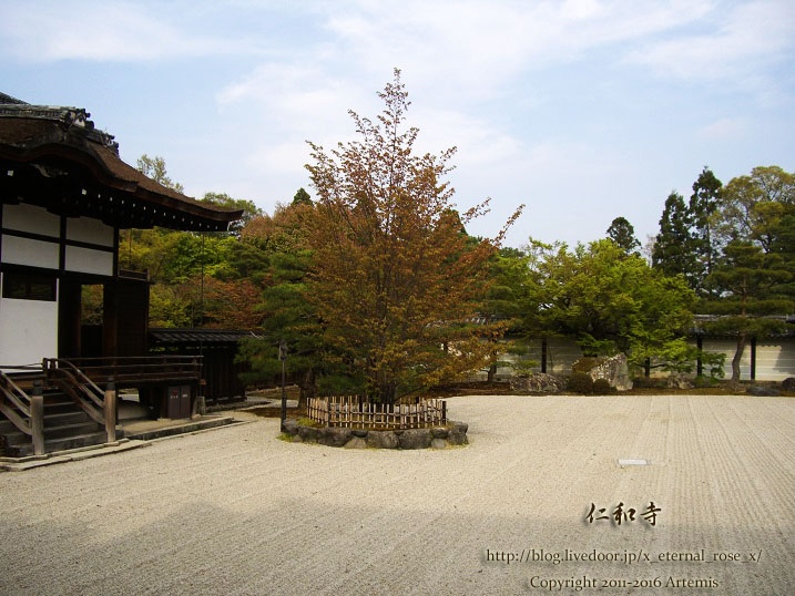 仁和寺 中門 御室桜と五重塔 9 No.3