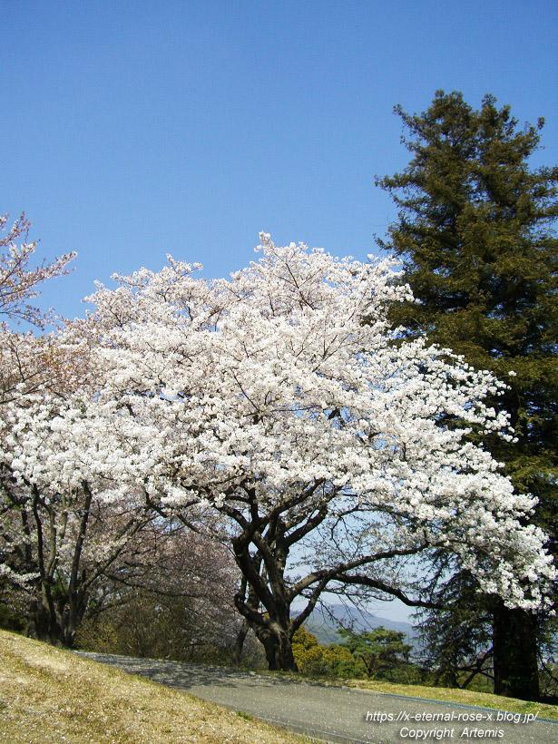 11.4.14.1 半田山植物園  (83)