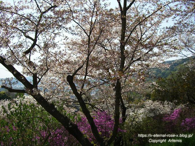 11.4.14.1 半田山植物園  (76)