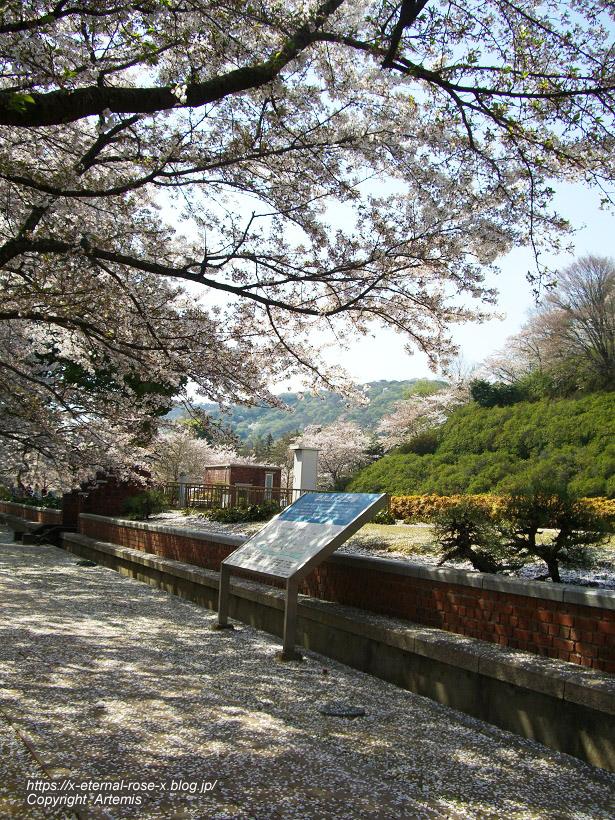 11.4.14.1 半田山植物園  (103)