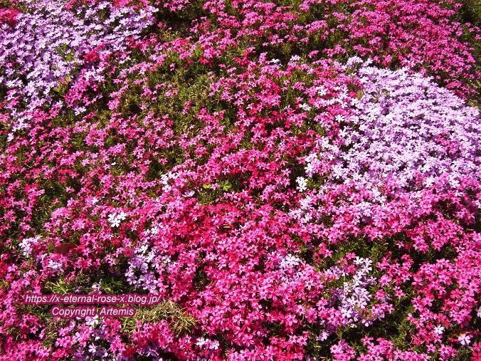 11.4.14.1 半田山植物園  (9)