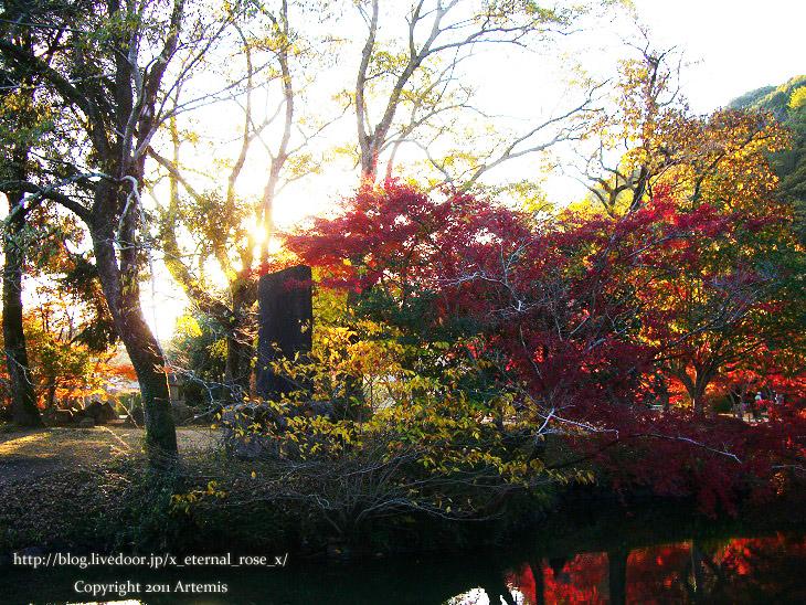 13.11.23.6 近水園  (13)
