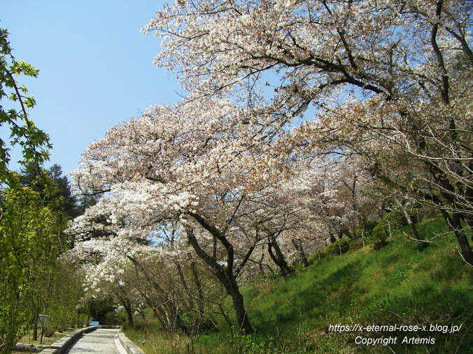 11.4.14.1 半田山植物園  (24)