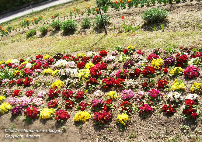 11.4.14.1 半田山植物園  (23)