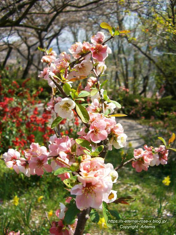 11.4.14.1 半田山植物園  (82)