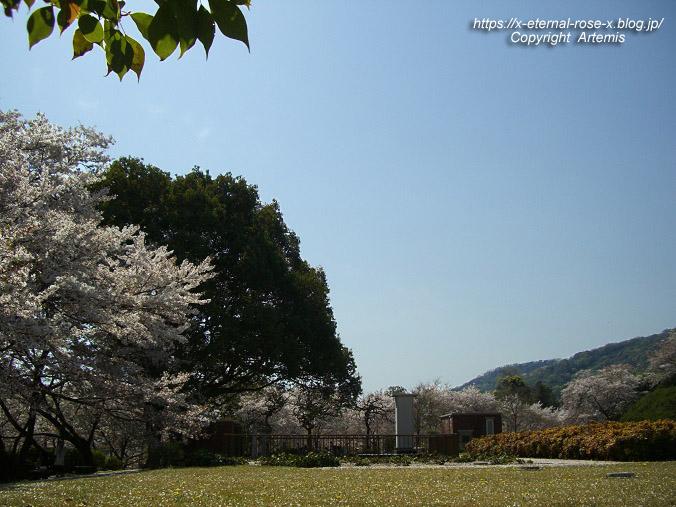 11.4.14.1 半田山植物園  (96)