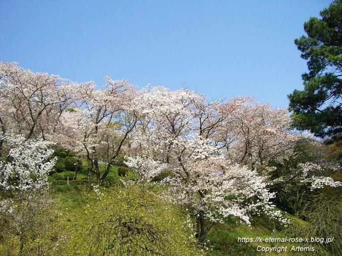11.4.14.1 半田山植物園  (22)