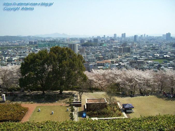 11.4.14.1 半田山植物園  (86)