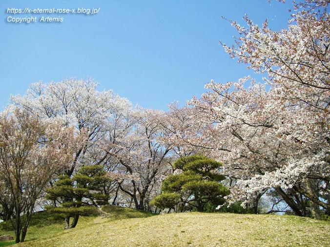 11.4.14.1 半田山植物園  (77)