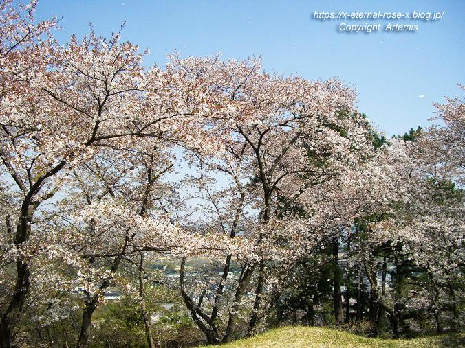 11.4.14.1 半田山植物園  (72)