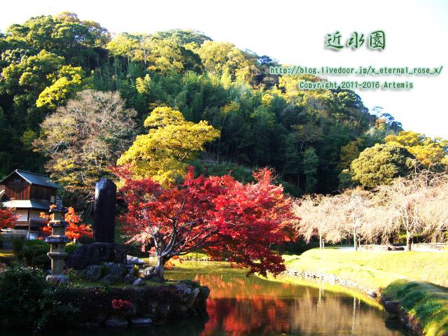 13.11.23.0 近水園  (24)