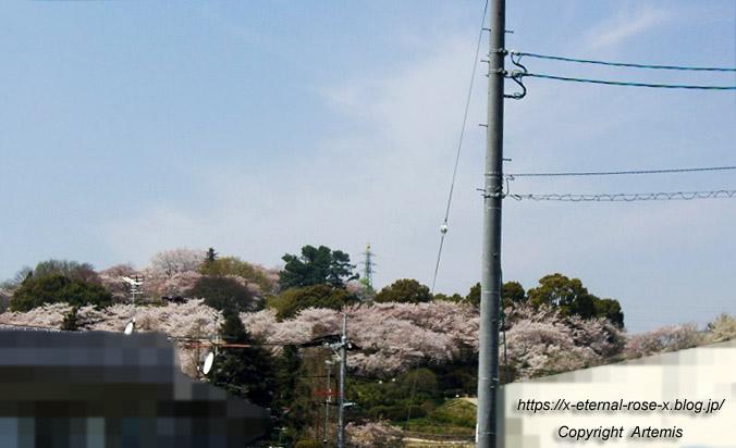 11.4.14.1 半田山植物園  (1)
