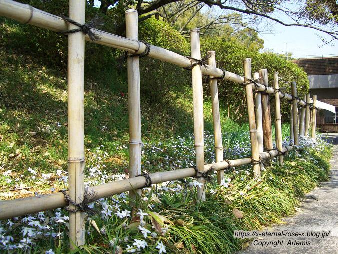 11.4.14.1 半田山植物園  (8)