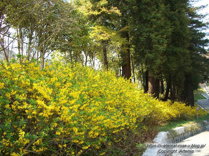 11.4.14.1 半田山植物園  (34)