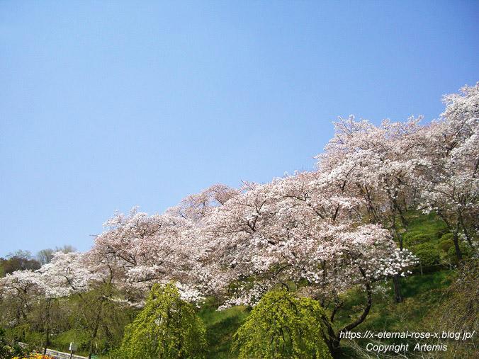 11.4.14.1 半田山植物園  (20)