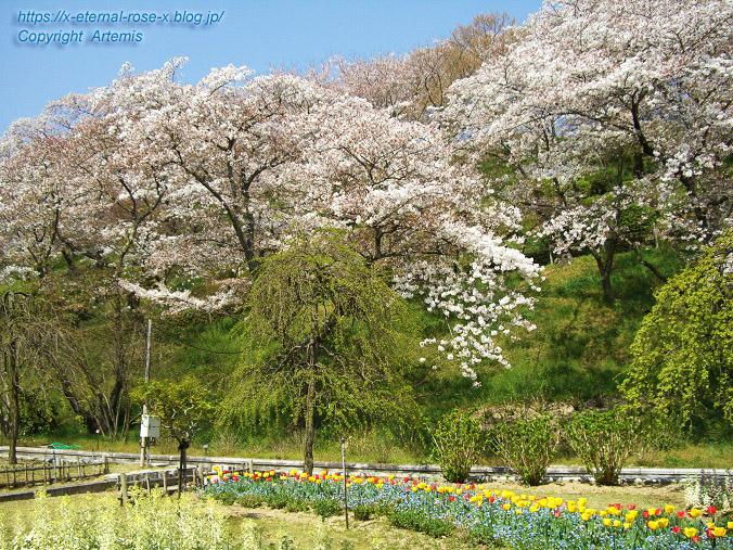 11.4.14.1 半田山植物園  (32)
