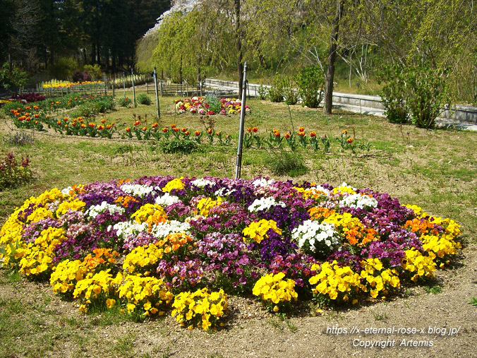 11.4.14.1 半田山植物園  (16)