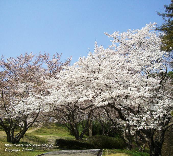 11.4.14.1 半田山植物園  (84)