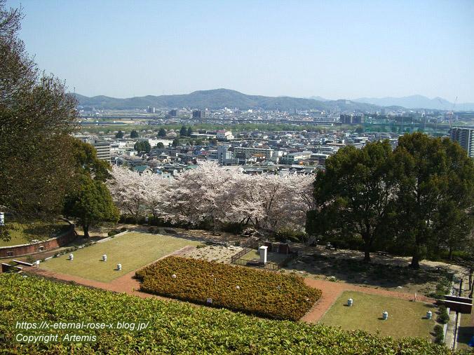 11.4.14.1 半田山植物園  (85)