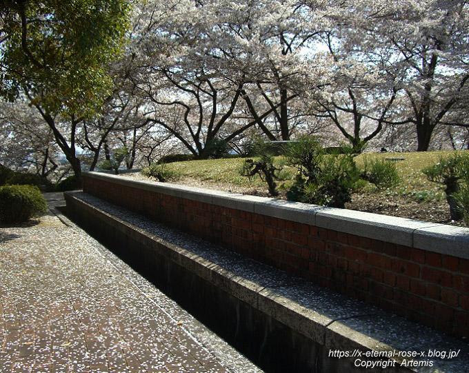 11.4.14.1 半田山植物園  (93)
