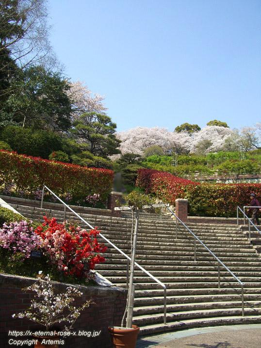 11.4.14.1 半田山植物園  (6)