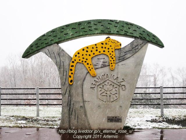 旭川市旭山動物園 エゾユキウサギ シロフクロウ エゾヒグマ アムールヒョウ ユキヒョウ 18