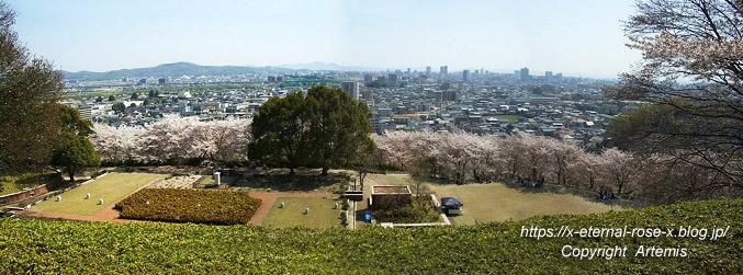 11.4.14.1 半田山植物園  (79)
