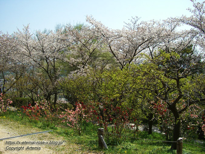 11.4.14.1 半田山植物園  (78)