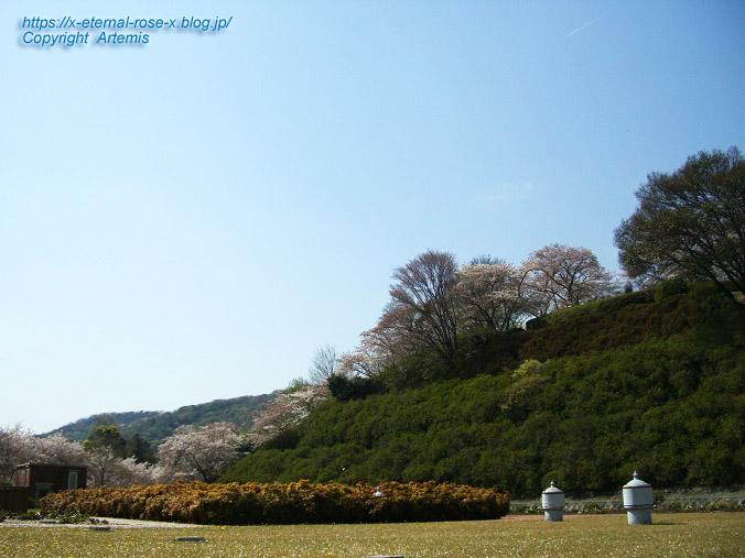 11.4.14.1 半田山植物園  (97)
