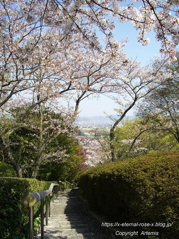 11.4.14.1 半田山植物園  (90)