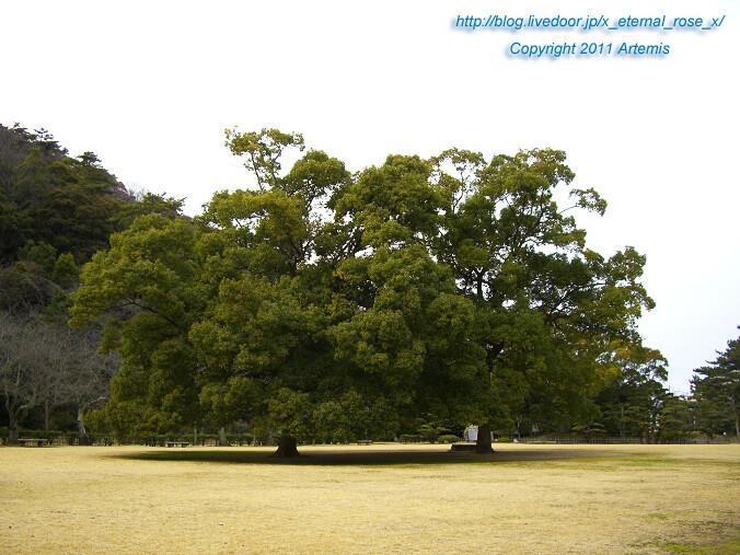 11.2.20 栗林公園  (53)