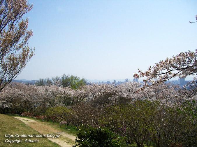 11.4.14.1 半田山植物園  (74)