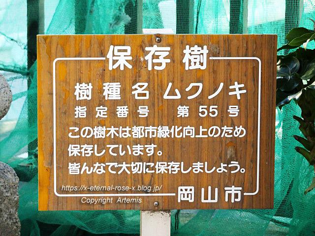 19.9.26.1 榎本神社  (4)