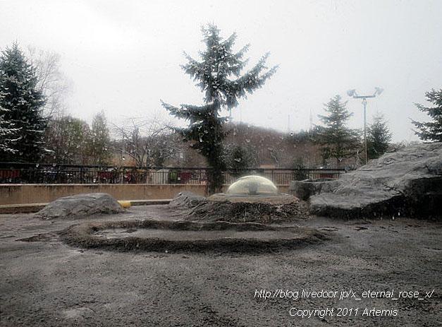 旭川市旭山動物園 ほっきょくぐま館 ホッキョクグマの散歩 18
