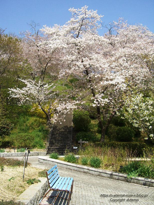 11.4.14.1 半田山植物園  (35)