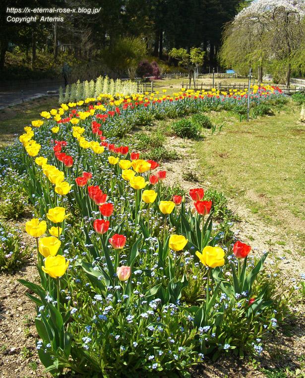 11.4.14.1 半田山植物園  (25)