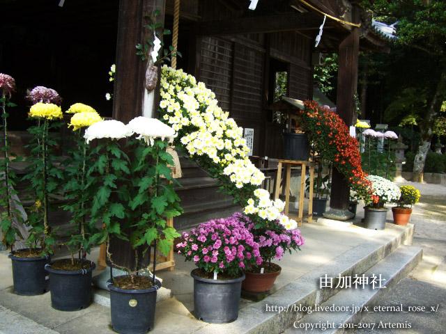 9 由加神社 和気  (60)
