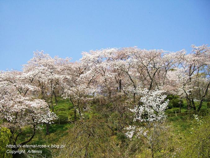 11.4.14.1 半田山植物園  (21)