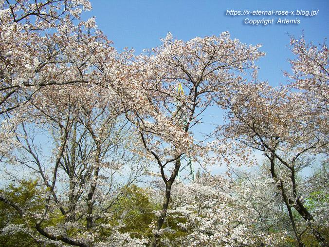 11.4.14.1 半田山植物園  (73)