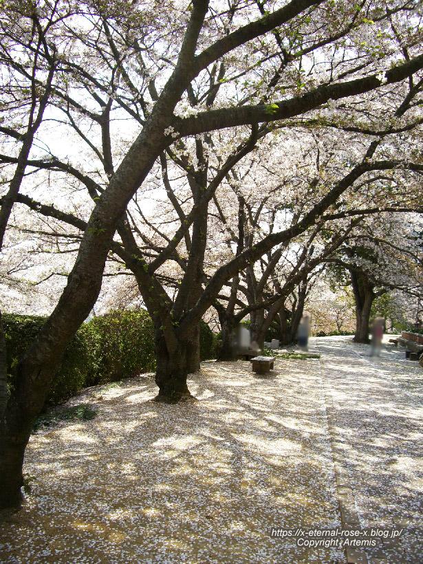 11.4.14.1 半田山植物園  (102)