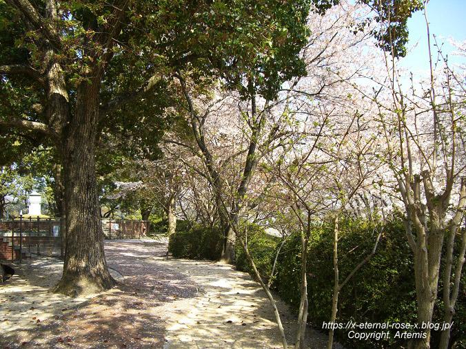 11.4.14.1 半田山植物園  (99)